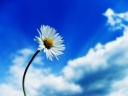 white_flower_and_blue_sky-1600x1200.jpg